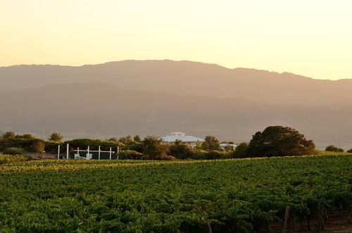 california ca sunset vineyard winery sainthelena davidarthur sainthelenaca davidarthurvineyards