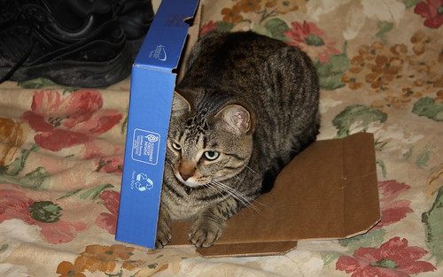 I don't think he understands the concept of a box. by ricmcarthur