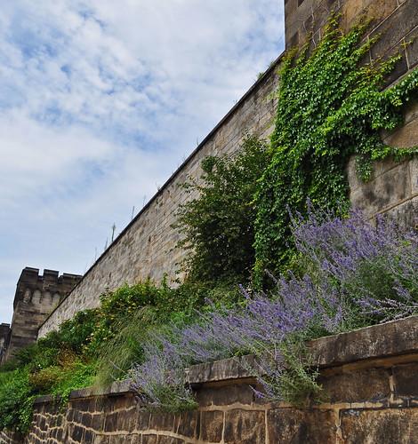 Terrace Garden (3)