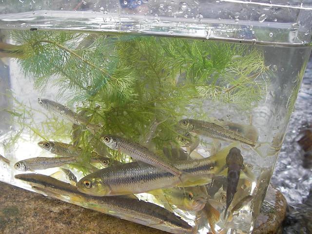 たくさんの魚が集まり,後で先生に名前や生態を教えていただいた.