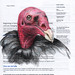 Vulture - B of A by PS pics
