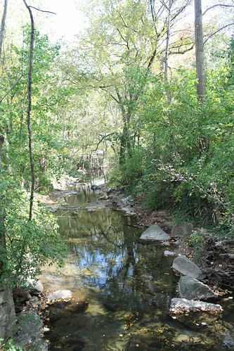 Image of stream and trees around Northwest Branch Watershed.
