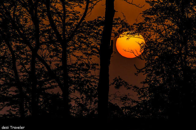 Sunset In Tadoba