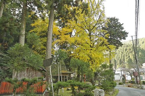 【写真】2013 紅葉 : 岩戸落葉神社(2)/2020-07-30/IMGP3166