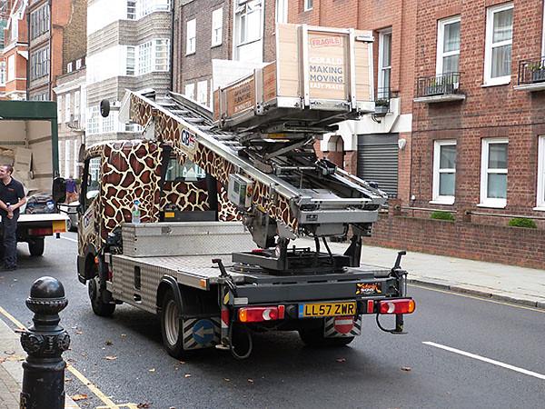 camion girafe