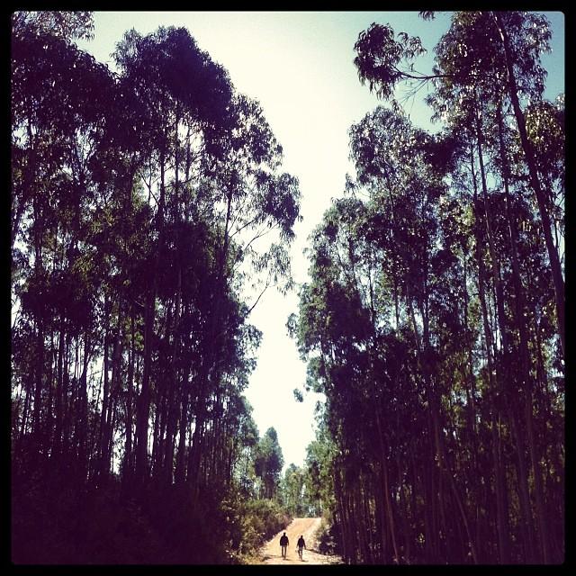 Walking to Rota Vicentina