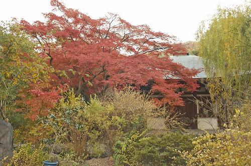 【写真】2013 紅葉 : 白沙村荘/2020-12-28/IMGP3713
