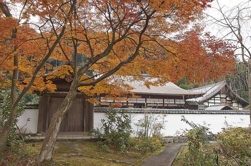 【写真】紅葉 : 正伝寺