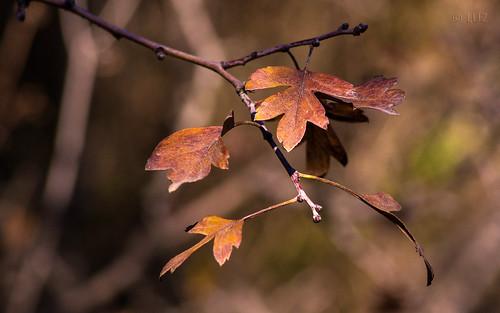 Ultimas hojas.