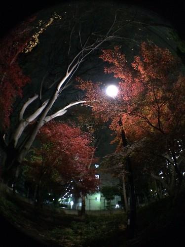 iPhone5sで撮影 olloclip fisheye lens 2013年12月17日