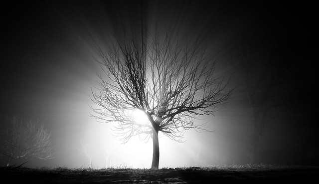 The Tree of Enlightenment
