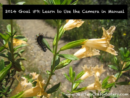 Goal #9- Learn to Use Camera in Manual