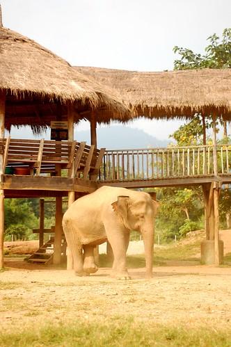 Elephant Nature Park 8