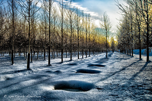 trees sunset snow ice frozen nursery pa february horsham snowbound week6 powerlinetrail 52of2014 themefloorsanytypeoffloorpavementpathcarpetetc