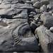 Small photo of Ammonite