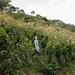 Coffee trees @ Café Inmaculada by skinnydiver