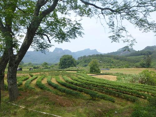 Fujian-Wuyi-Xingcun-village (26)