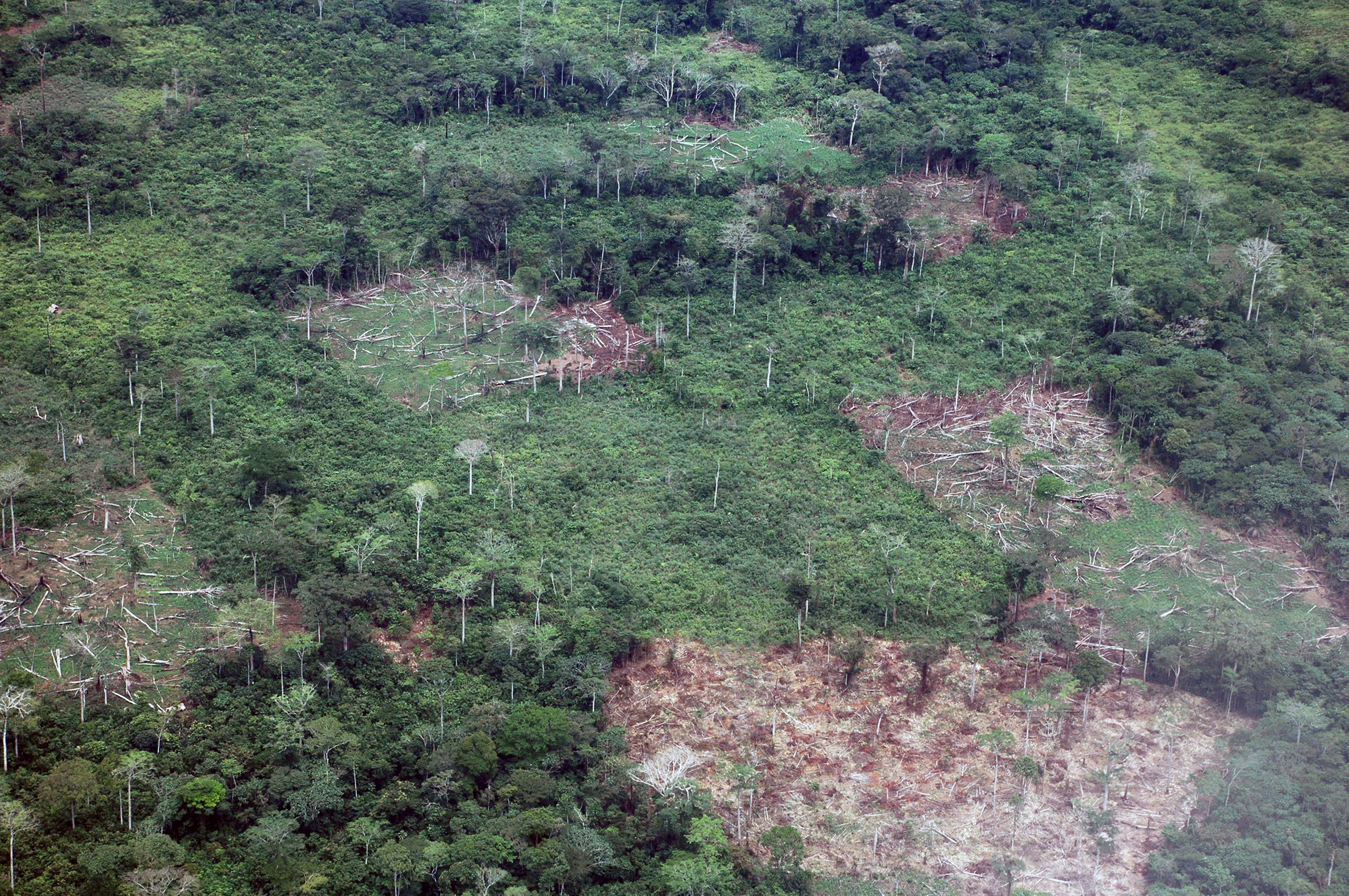 speech on deforestation in the amazon Brazil's amazon deforestation falls 16%, according to government  filho's  speech, which conditioned the control of deforestation to the.