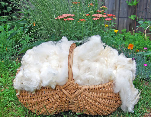 Ontario Romney cleaned ewe lamb fleece in Jamaican handwoven basket