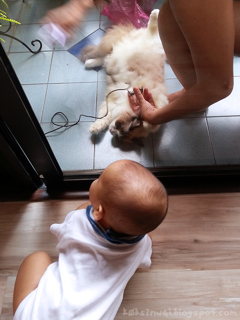212 Days Old - Darwin Watching Isobel Get Shorn