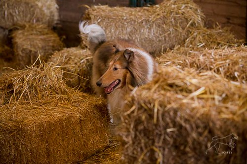 Barn Hunt Examples-5258