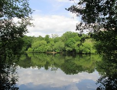 Reflection of trees on Heath Pond, Petersfield