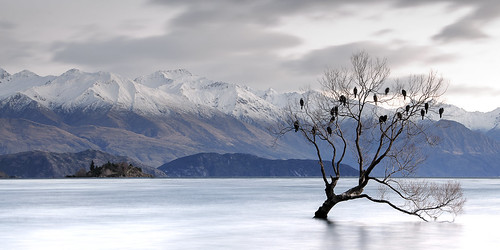 longexposure sun lake tree willow cormorant rise shag wanaka
