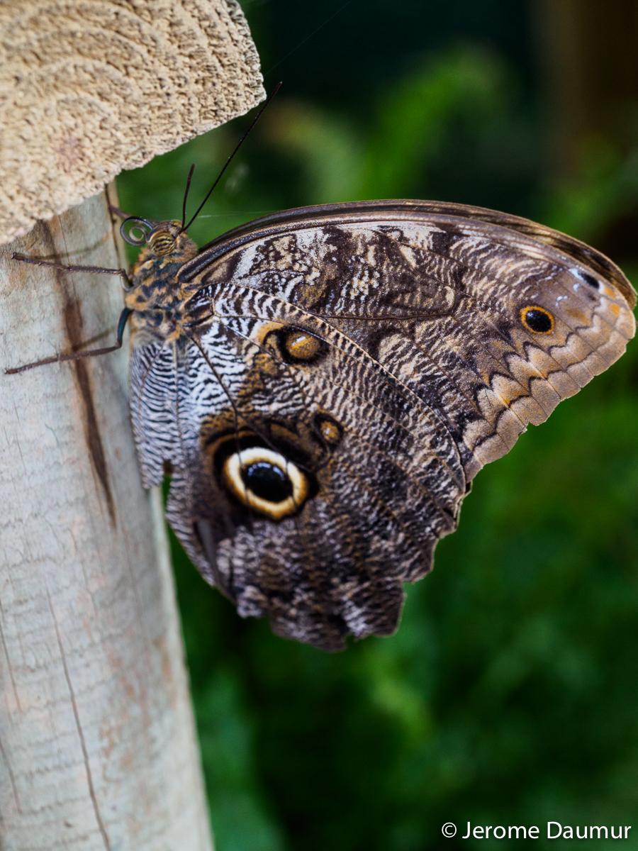 Butterflies Garden 5