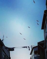 #seagull #fly #freedom #istanbul #subhanAllah #blue #ig_street #ig_worldclub #ig_photooftheday #ig_sharepoint #instamoment #picoftheday #gabbiano