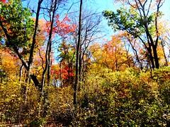 Mill Pond Park -- Autumn (88)