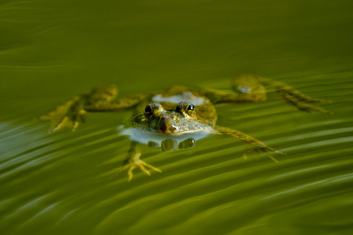 nature weather rural canon asia moments village frog bangladesh 550d 55250mm