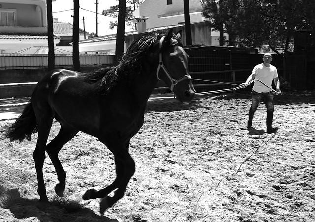 Black horse training from Flickr via Wylio