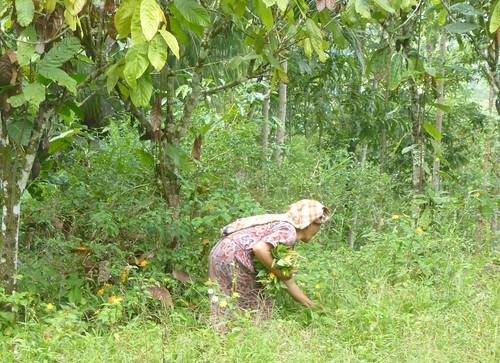 Sulawesi13-Lo'ko Mata-Ke'pa (28)