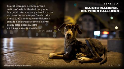 Perro callejero by alter eddie