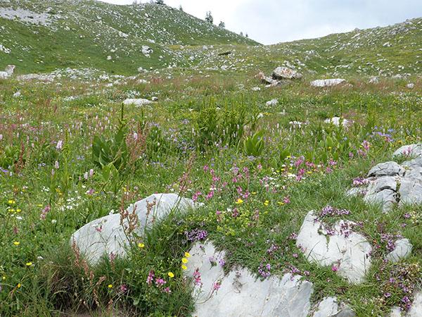 fleurs au col des champs