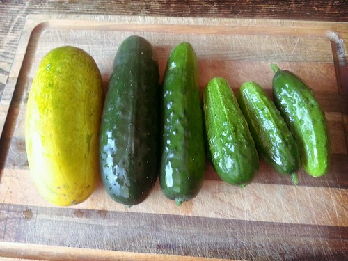 2013.08_cucumbers