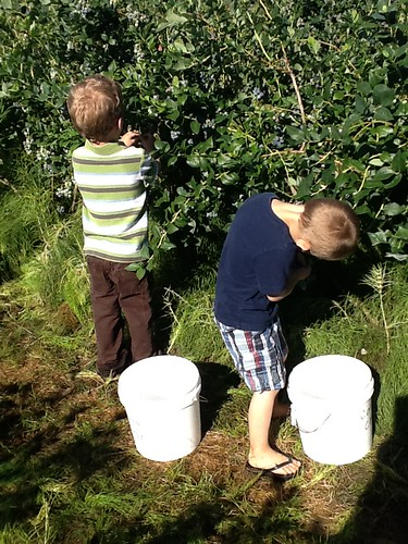 July 10 2013 Blueberry picking with Bunkers (2)
