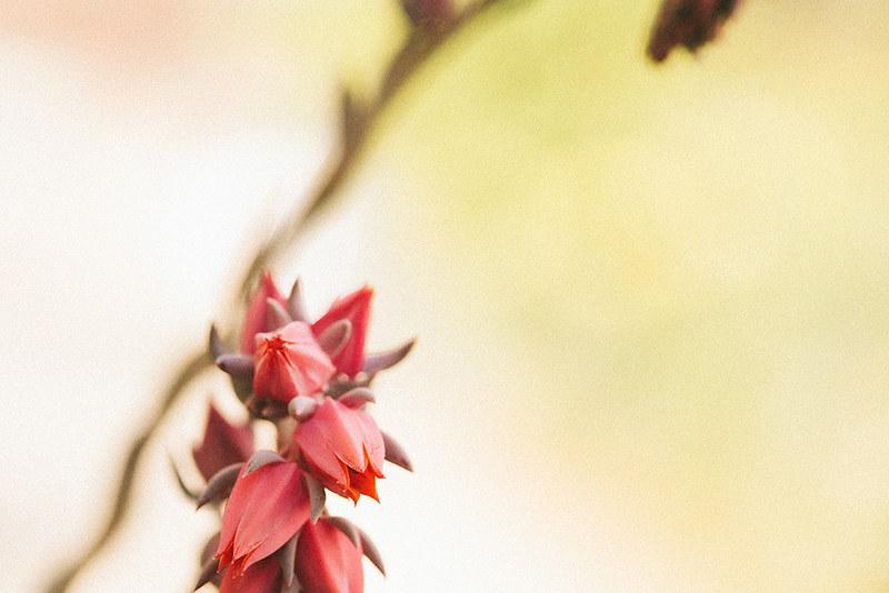 succulent_3web