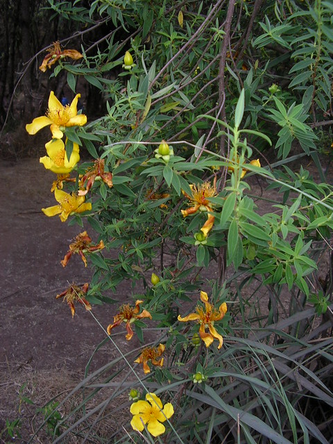 Flowers and exotic plants from Mount Kilimanjaro