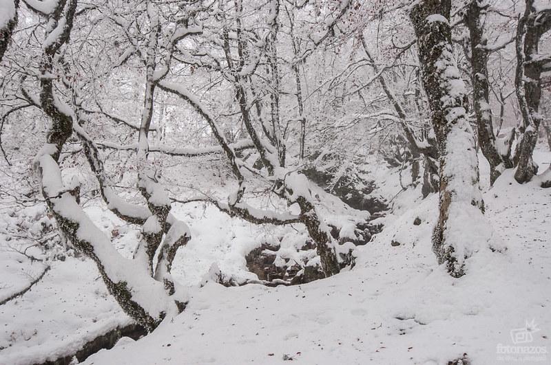 El Hayedo de la Pedrosa en invierno