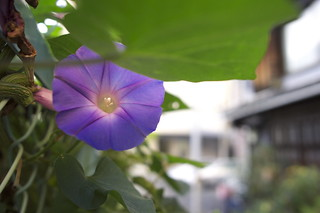 The morning glory of late November seen on the commuting way.