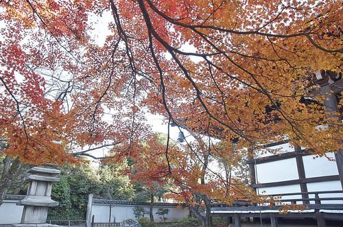 【写真】2013 紅葉 : 妙顕寺/2020-11-01/IMGP4152