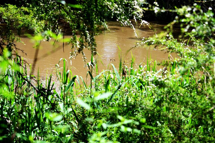 grassy-creek