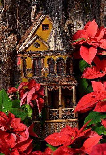 christmas flowers winter red architecture cincinnati poinsettia blossoms blooms christmasdisplay krohnconservatory mygearandme jennypansing