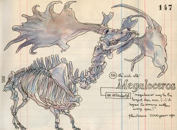 megaloceros2