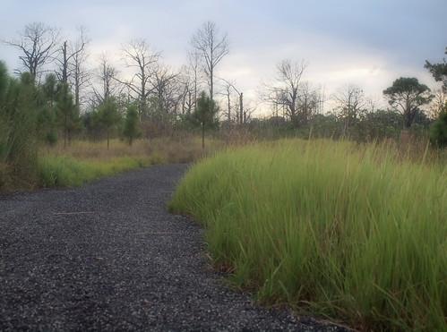 pond florida trail preserve fortpierce georgelestrange