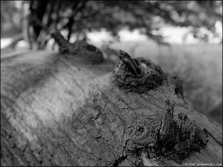 Fallen Tree – Detail. Summer 2013
