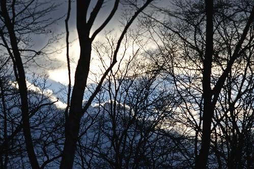 blue trees light shadow sky orange cloud white blur france tree nature silhouette clouds forest landscape grey gris lights fuji dof bokeh bleu ciel arbres f56 nuage nuages paysage arbre blanc flou ombres hautemarne xe1 lumières forêt lumière xpro1 elmaritr135mm28 fujixe1 kiwilmalrfxadapter
