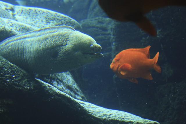 Moray Eel & Fish