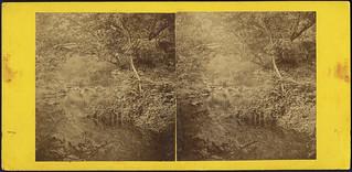 In the Devil's Glen, Co. Wicklow